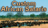 examples of african safaris - custom trips to africa